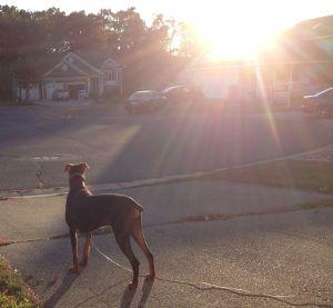 Tori_Sunset